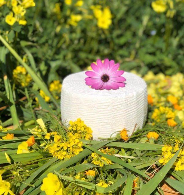 cacioricotta presidio slowfood